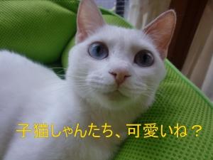 ブルーちゃん③'