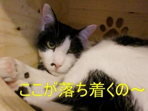 なおちゃん'