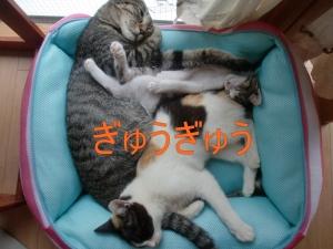 ゲン&こねこ③'