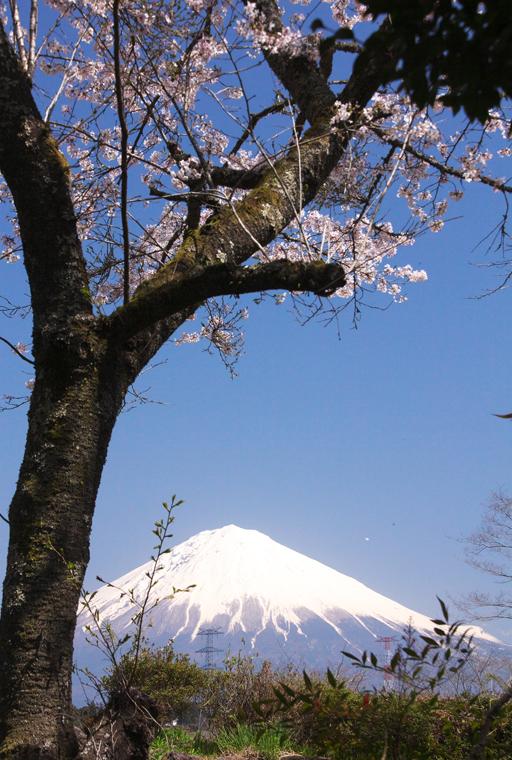 富士宮-130