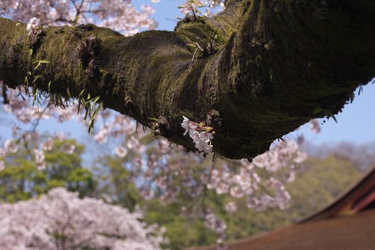 富士宮浅間神社-121-2