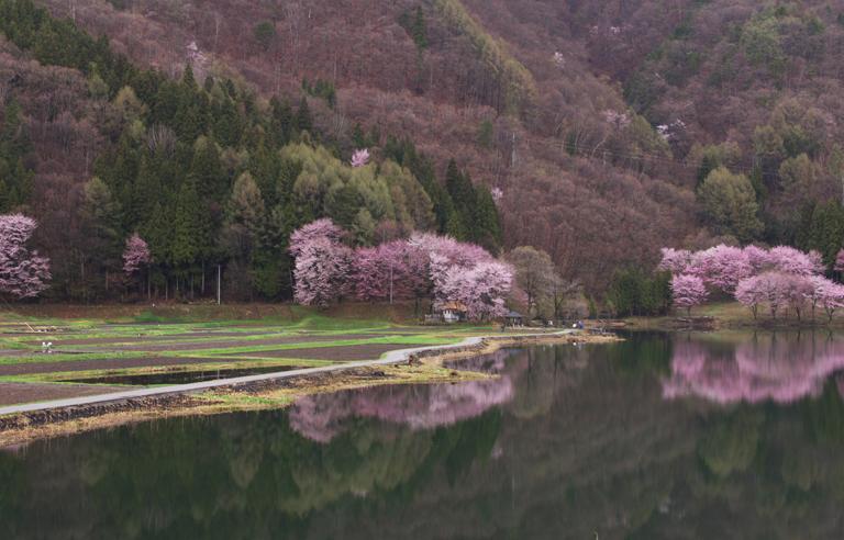 中綱湖-481-2