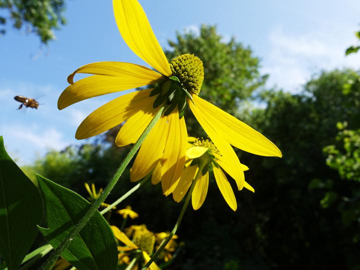 睡蓮の庭の花-665-6