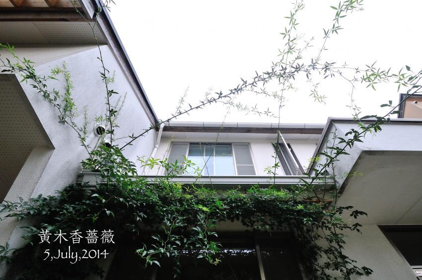 DSC_0016-L_convert_20140710155205.jpg