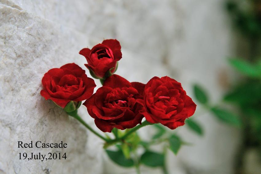 DSC_1405-L_convert_20140724073442.jpg