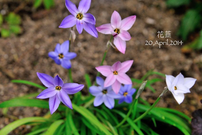DSC_1573-L_convert_20140422170528.jpg