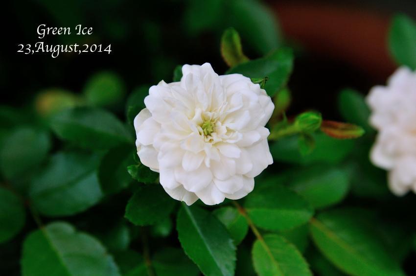 DSC_2416-L_convert_20140824120357.jpg