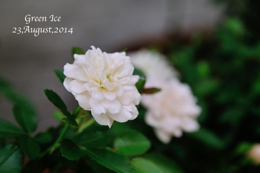 DSC_2417-L_convert_20140824120414.jpg