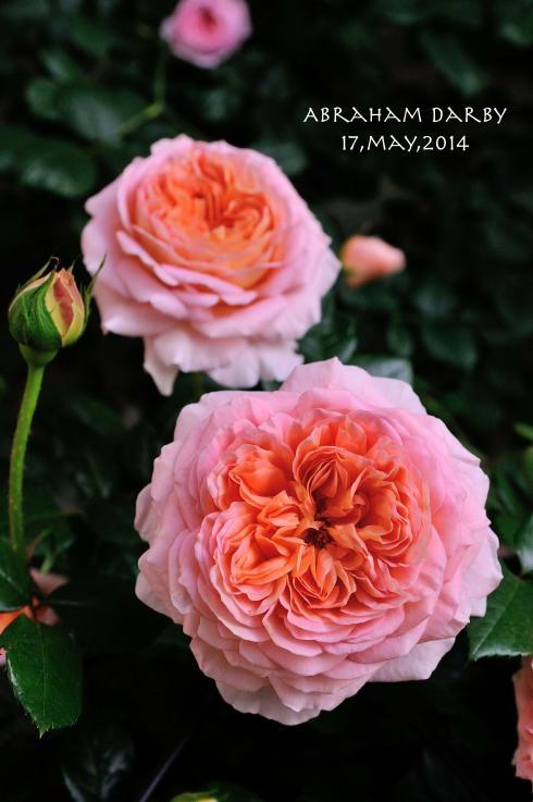 DSC_6242-L_convert_20140520053801.jpg