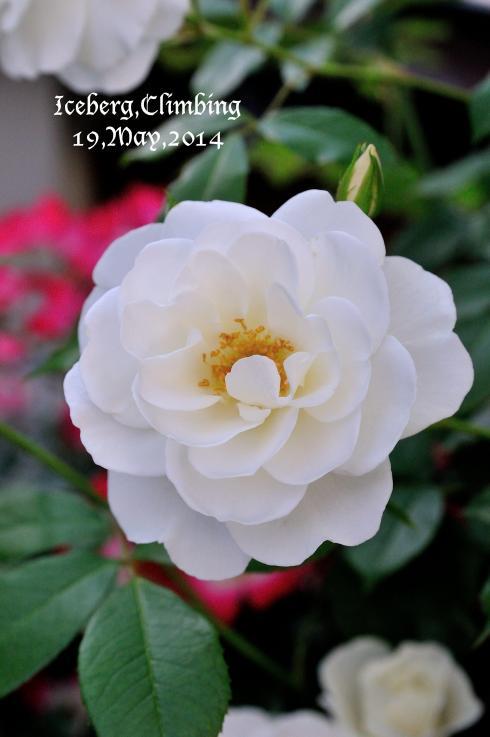 DSC_6815-L_convert_20140529144947.jpg