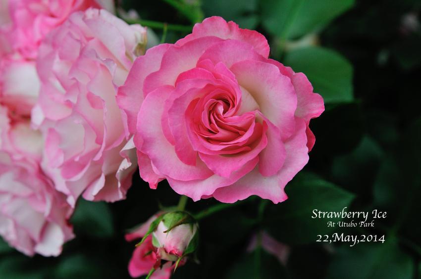 DSC_7051-L_convert_20140529235036.jpg