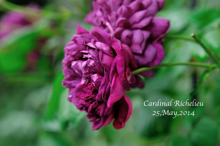 DSC_7429-L_convert_20140529140618.jpg