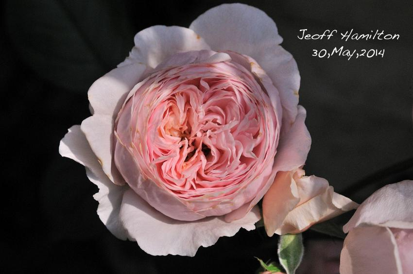 DSC_7661-L_convert_20140530113755.jpg