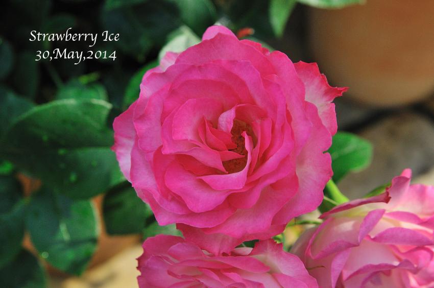 DSC_7663-L_convert_20140530113814.jpg