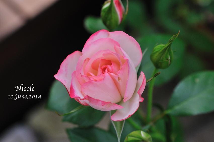 DSC_7972-L_convert_20140610134934.jpg