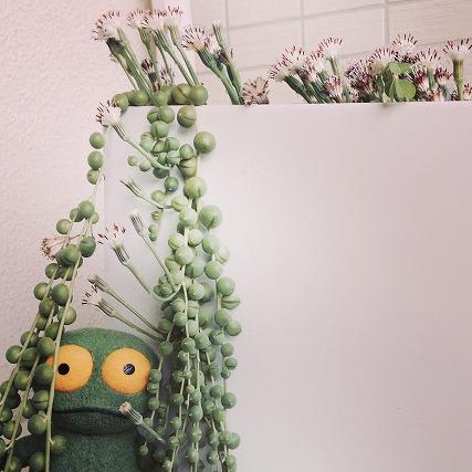 花とケロ (7)