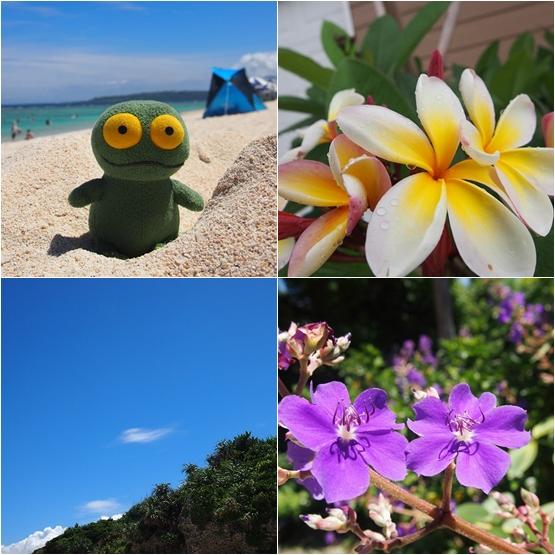 ゆうブログケロブログ沖縄 (18)
