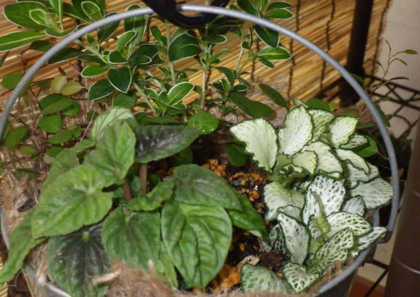 観葉植物とか。