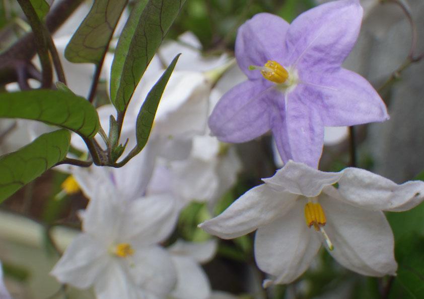 季節の花。