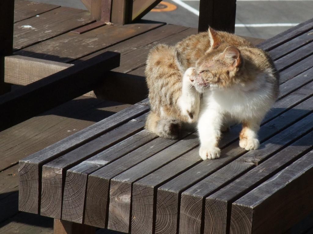日向岬の猫