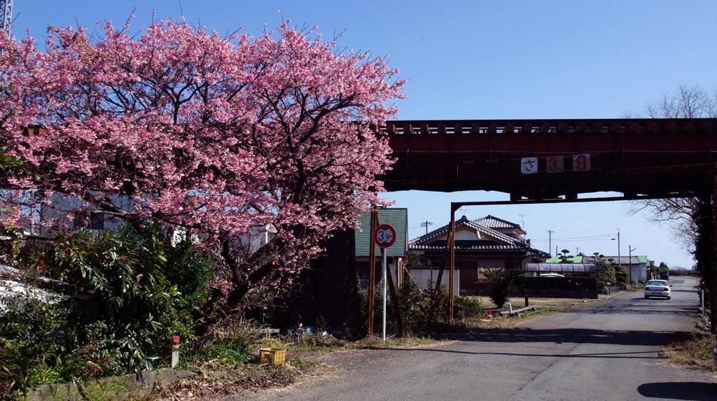 美々津の町に花の咲く