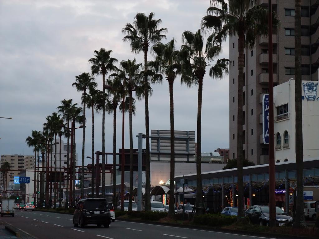 宮崎市内ヤシの木街路樹