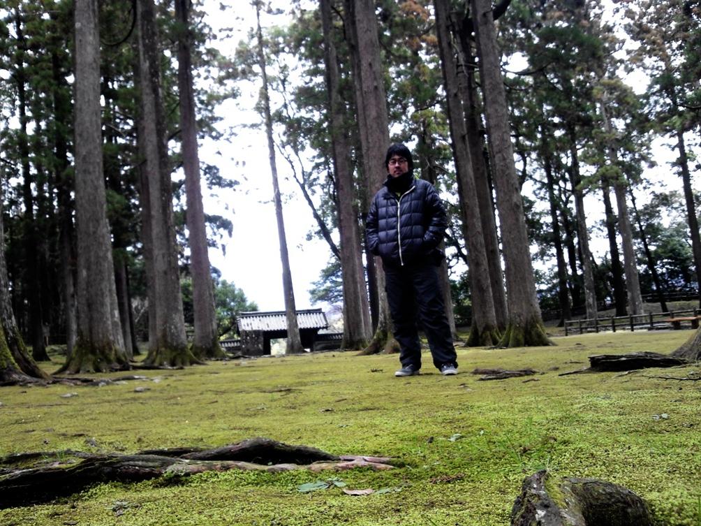 本丸には立派な飫肥杉が