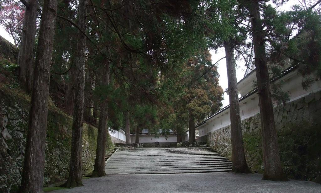 飫肥城石垣と飫肥杉