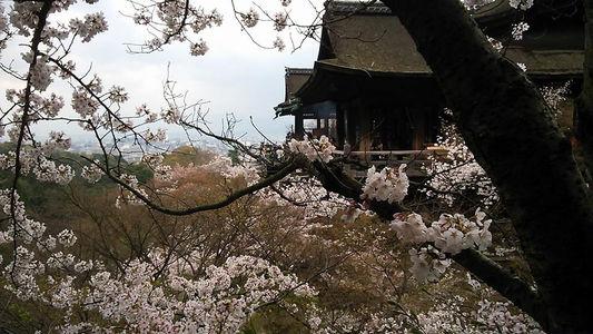 kiyomizu_20140405230251128.jpg