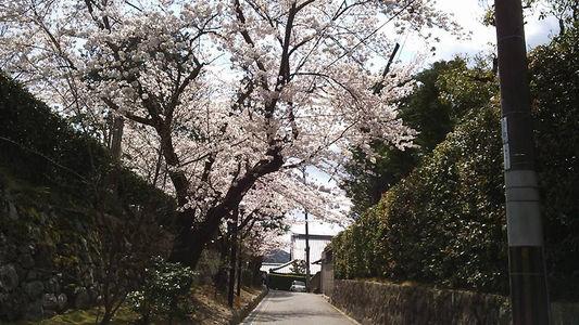komyoji3.jpg