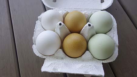 とよまる卵1