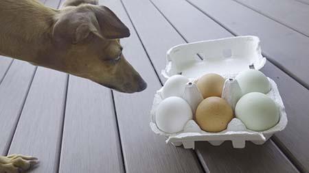 とよまる卵2