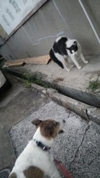 小梅vs野良猫