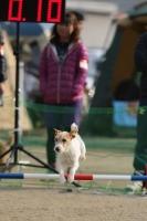 kouchi 279411_R