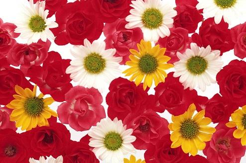 花いっぱい50