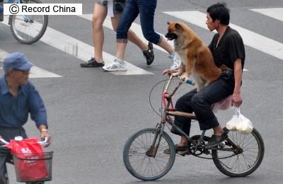 中国人「中国の貧乏人がお金持ちを恨む5つの原因」 中国の反応