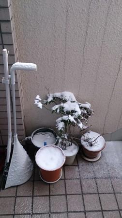 植木の上に積もる雪