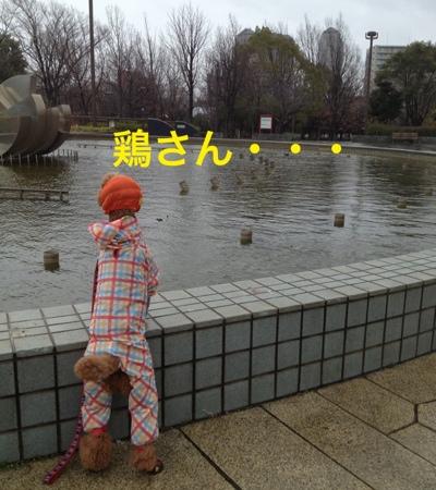 fc2blog_201403132043409f3.jpg