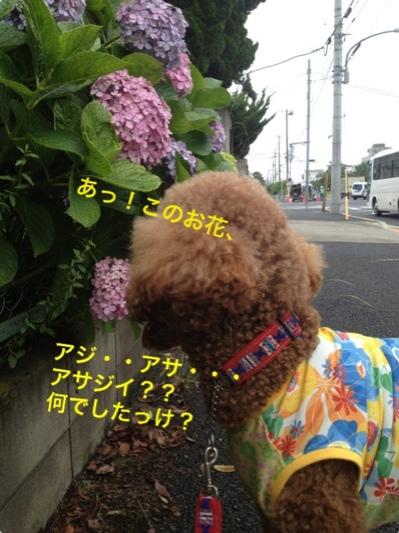 fc2blog_20140613000949eb3.jpg