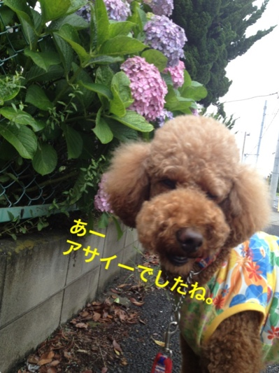 fc2blog_201406130010254ac.jpg