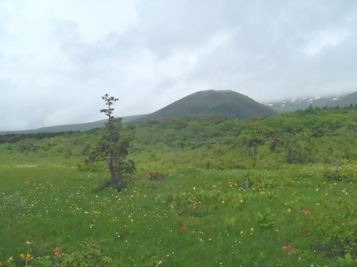 栗駒湿原2014-6-2