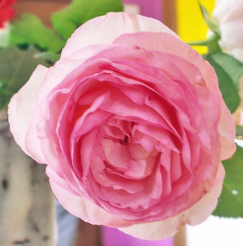 大きい薔薇