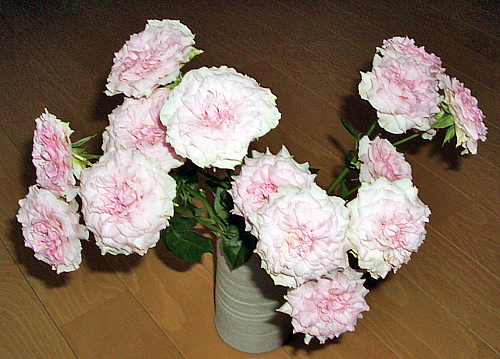 ピンクの花々