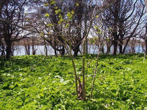 20140510久種湖