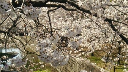 桜2(2014)