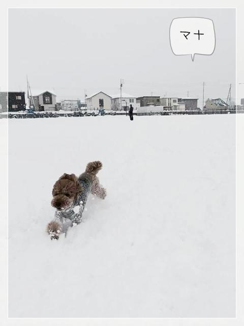 寒いけどマナ01