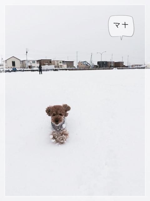寒いけどマナ02