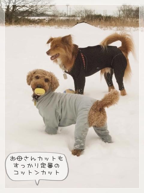 寒いけどコタ04