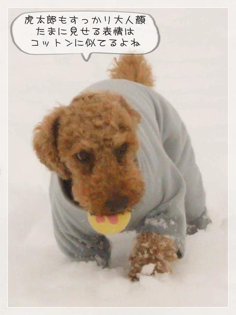 寒いけどコタ10
