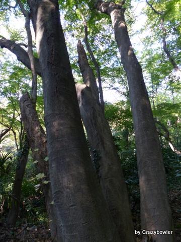 大池の広葉樹林(日立製作所中央研究所)